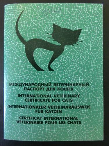 как вывезти котенка за границу