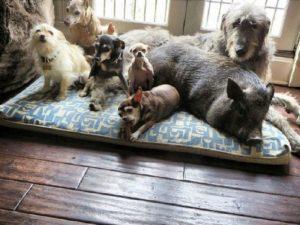 Содержание животных в коммунальной квартире по закону